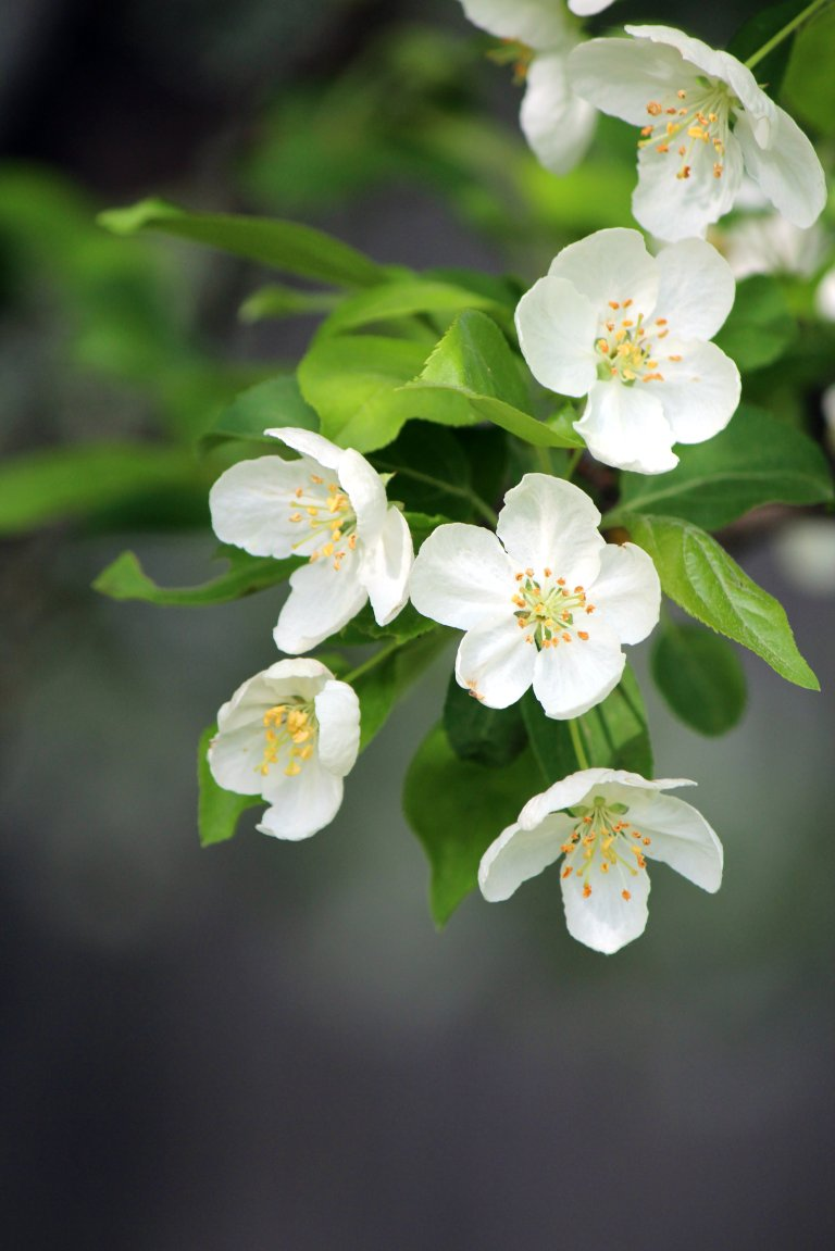 White_Flower_Blossom_2
