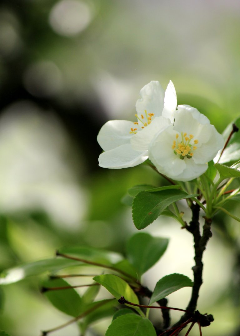 White_Flower_Blossom_3