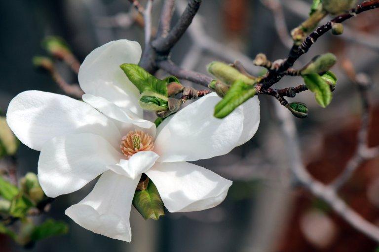 White_Flower_Center